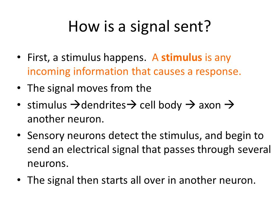 How is a signal sent First, a stimulus happens. A stimulus is any incoming information that causes a response.