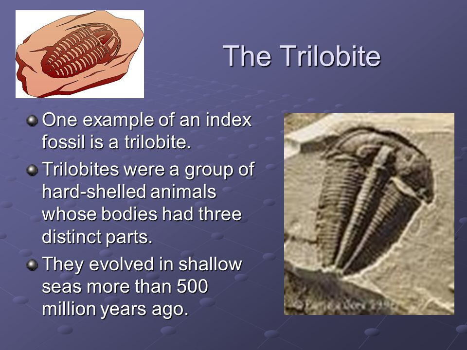 The Trilobite One example of an index fossil is a trilobite.