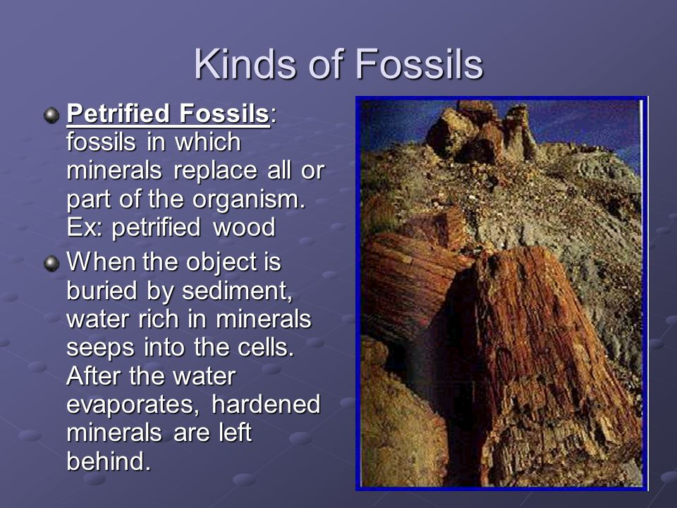 Kinds of Fossils Petrified Fossils: fossils in which minerals replace all or part of the organism. Ex: petrified wood.