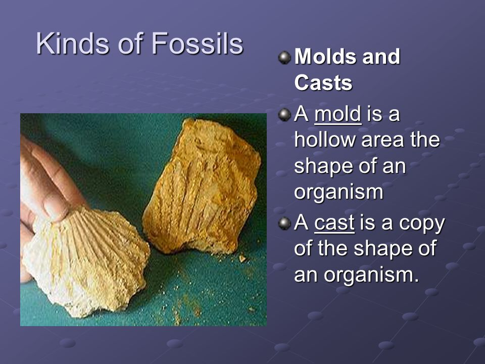Kinds of Fossils Molds and Casts