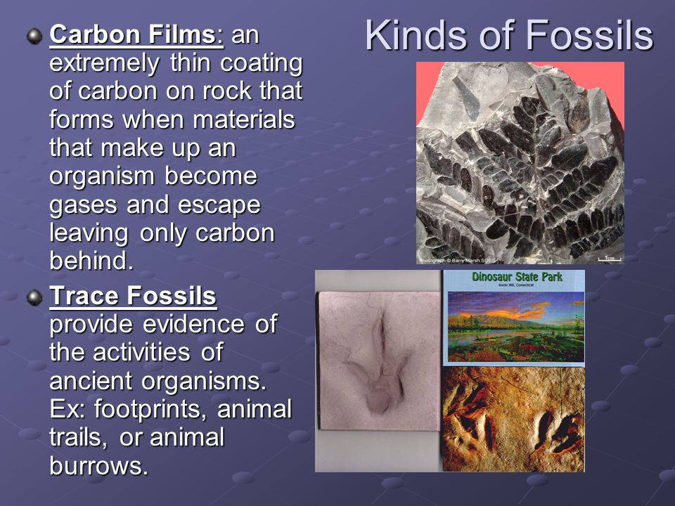 Kinds of Fossils