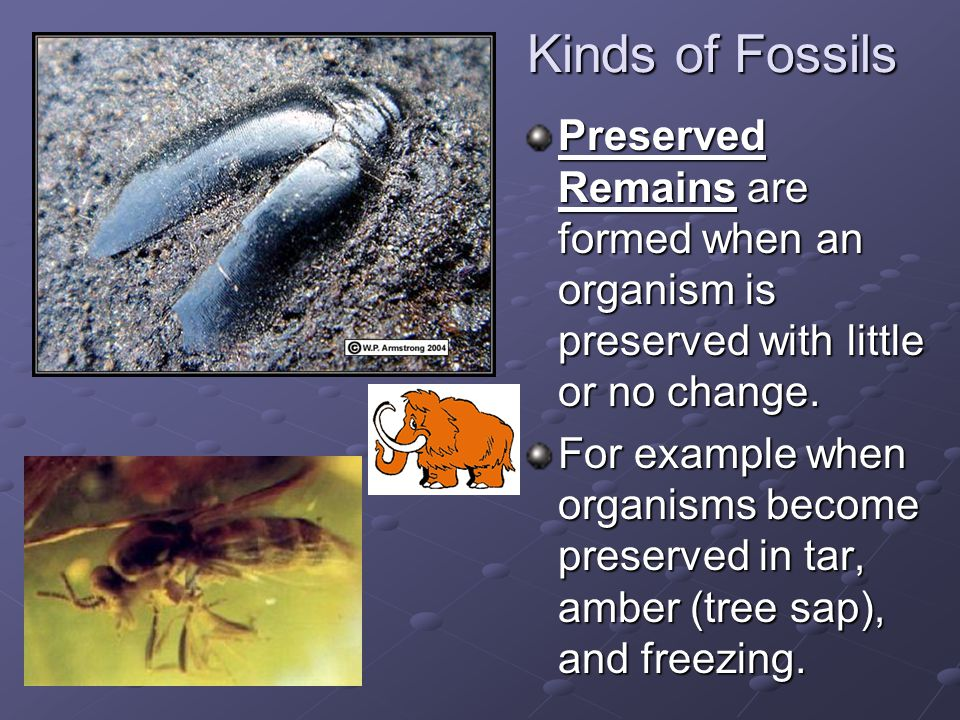 Kinds of Fossils Preserved Remains are formed when an organism is preserved with little or no change.