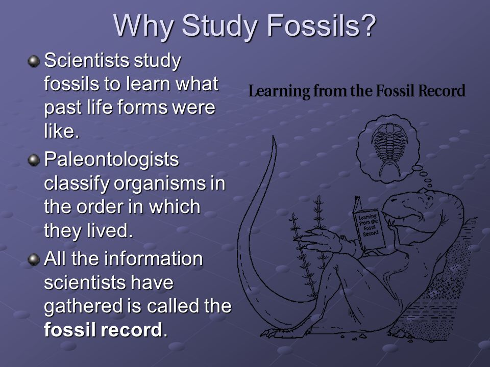 Why Study Fossils Scientists study fossils to learn what past life forms were like.
