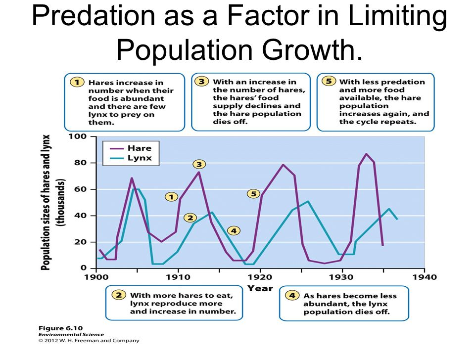 Predation as a Factor in Limiting Population Growth.