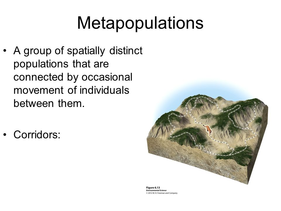 Metapopulations A group of spatially distinct populations that are connected by occasional movement of individuals between them.