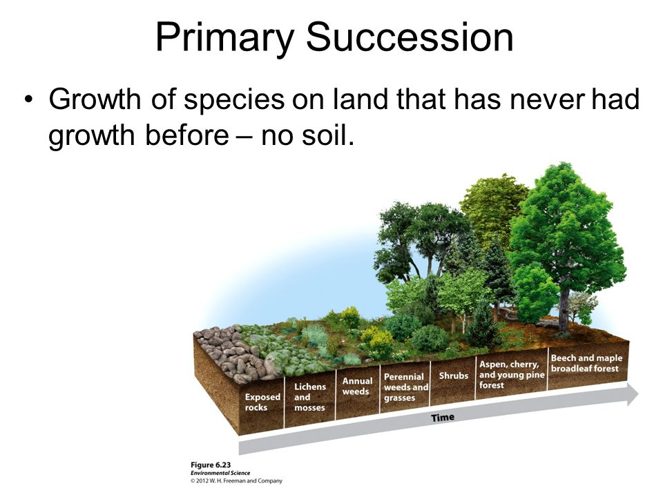 Primary Succession Growth of species on land that has never had growth before – no soil.