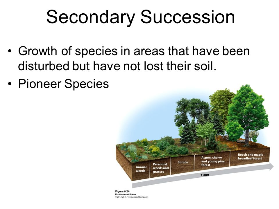 Secondary Succession Growth of species in areas that have been disturbed but have not lost their soil.