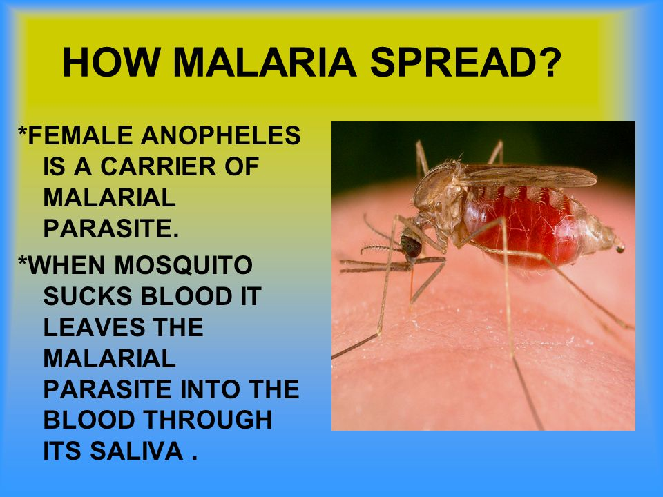 HOW MALARIA SPREAD *FEMALE ANOPHELES IS A CARRIER OF MALARIAL PARASITE.