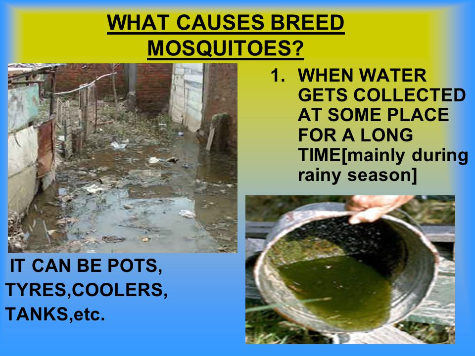WHAT CAUSES BREED MOSQUITOES