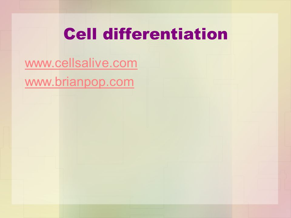 Cell differentiation www.cellsalive.com www.brianpop.com