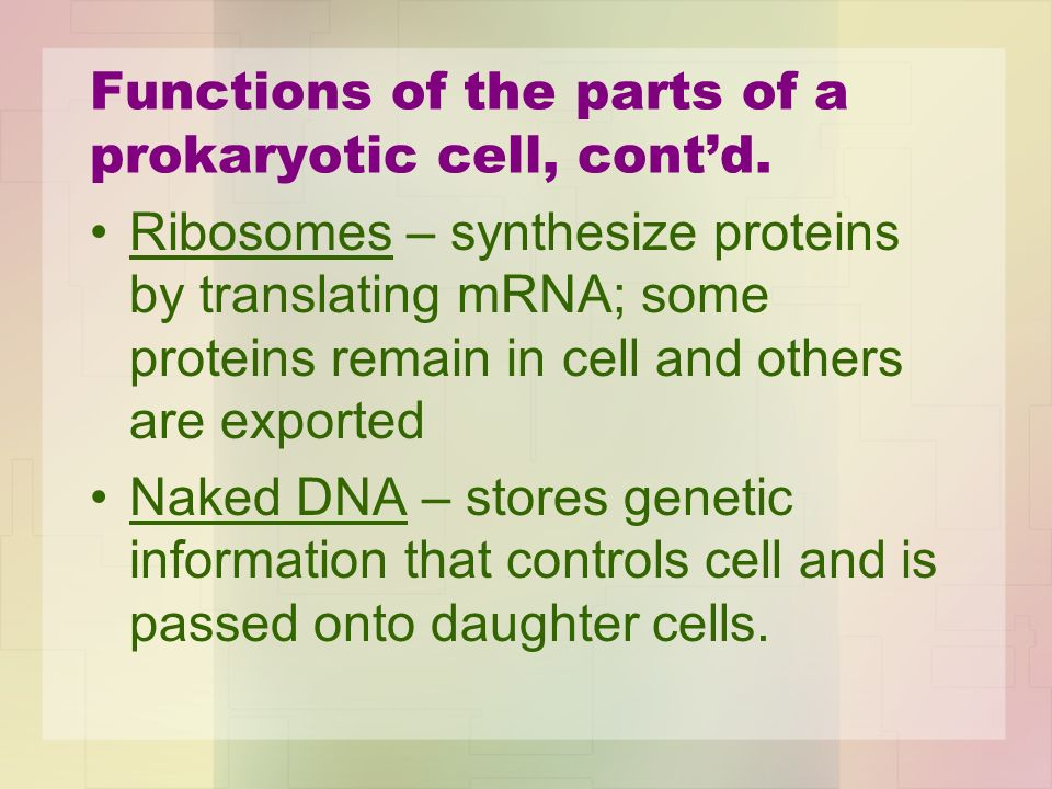 Functions of the parts of a prokaryotic cell, cont'd.