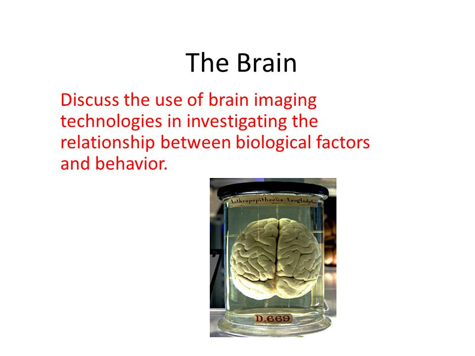 The Brain Discuss the use of brain imaging technologies in investigating the relationship between biological factors and behavior.