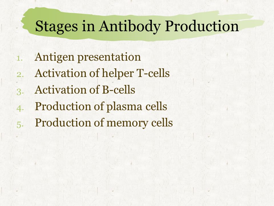 Stages in Antibody Production