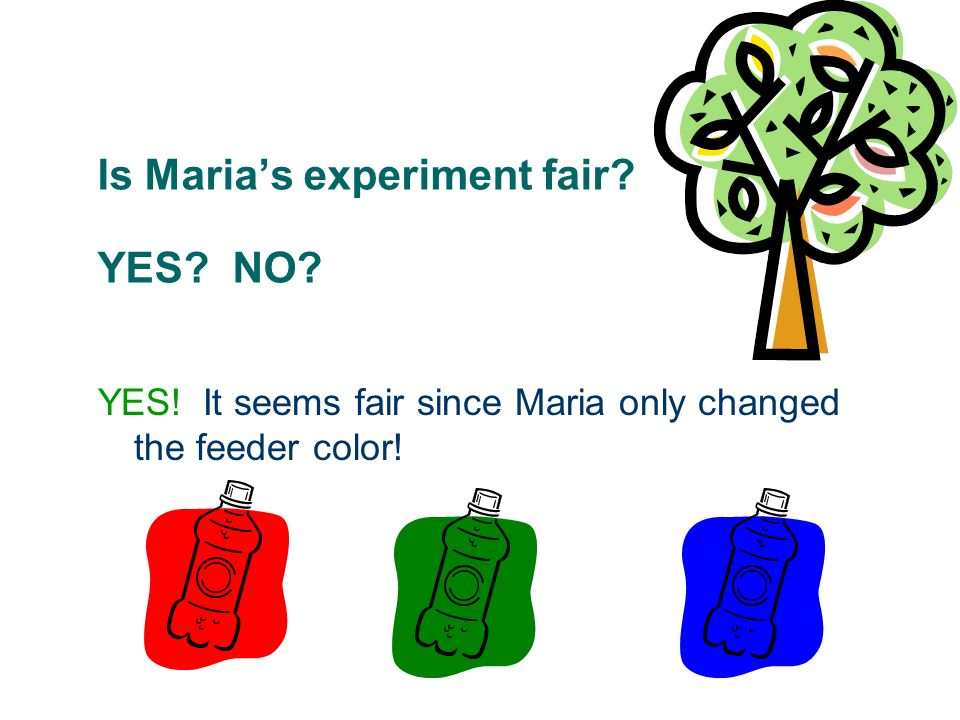 Is Maria's experiment fair YES NO