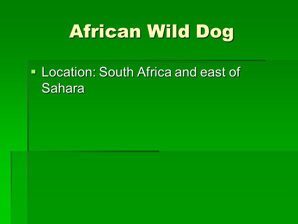 African Wild Dog Location: South Africa and east of Sahara
