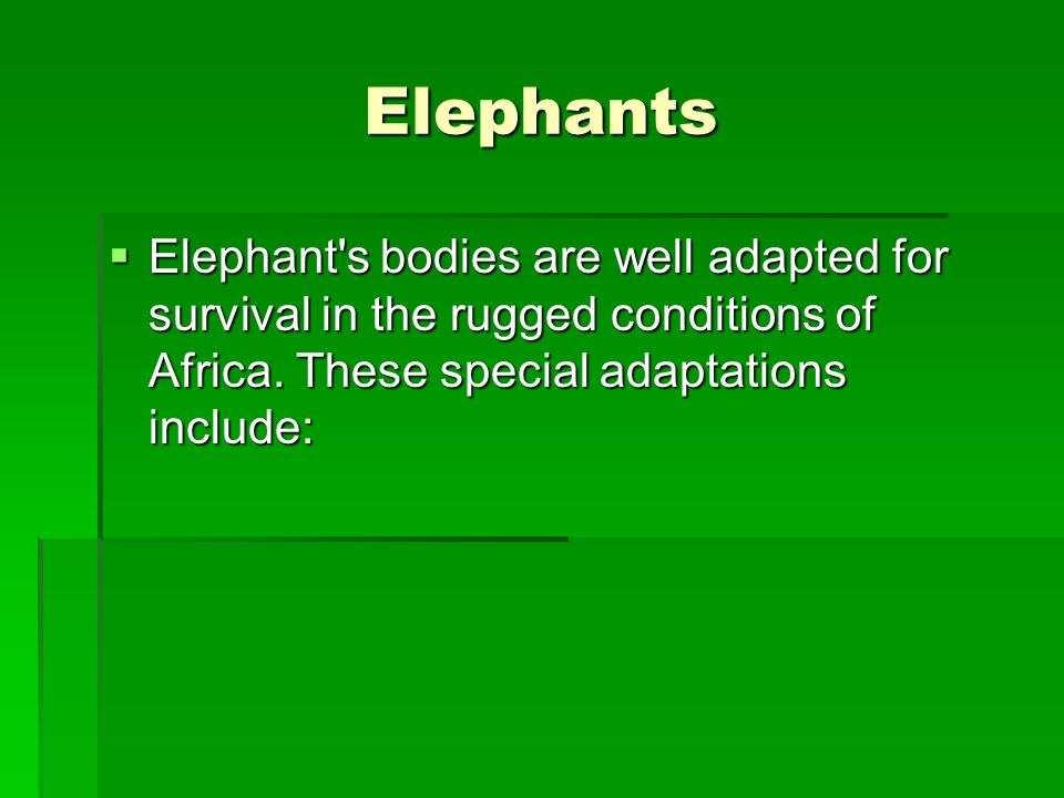 Elephants Elephant s bodies are well adapted for survival in the rugged conditions of Africa.