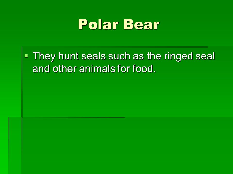 Polar Bear They hunt seals such as the ringed seal and other animals for food.