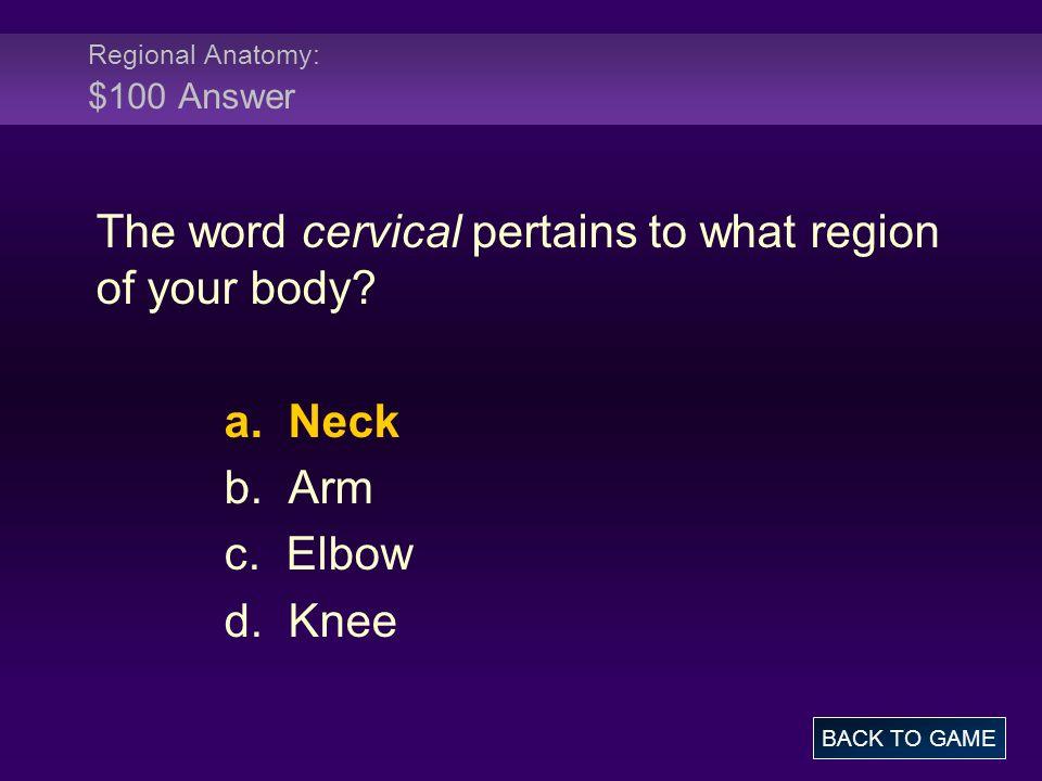 Regional Anatomy: $100 Answer