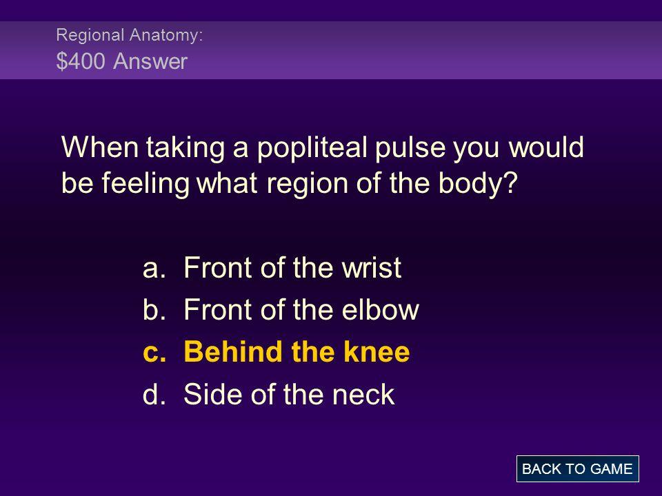 Regional Anatomy: $400 Answer