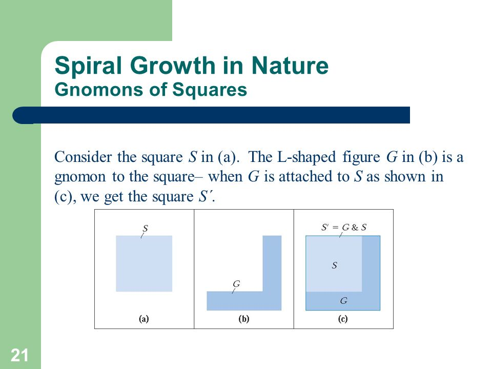 Spiral Growth in Nature Gnomons of Squares