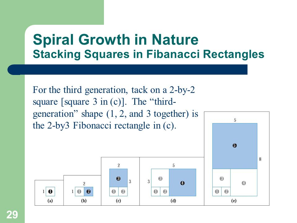 Spiral Growth in Nature Stacking Squares in Fibanacci Rectangles