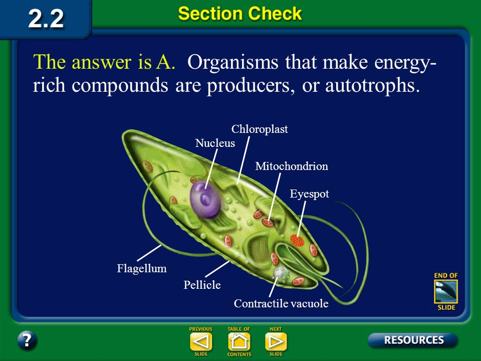 The answer is A. Organisms that make energy-rich compounds are producers, or autotrophs.