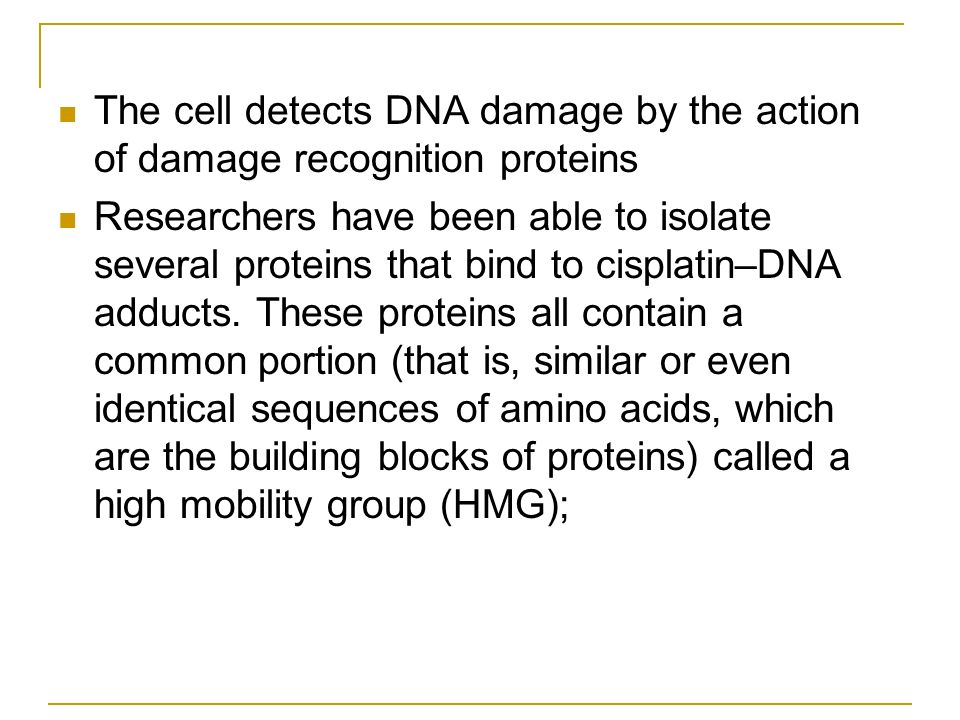 The cell detects DNA damage by the action of damage recognition proteins