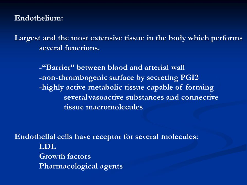 Endothelium: Largest and the most extensive tissue in the body which performs. several functions. - Barrier between blood and arterial wall.