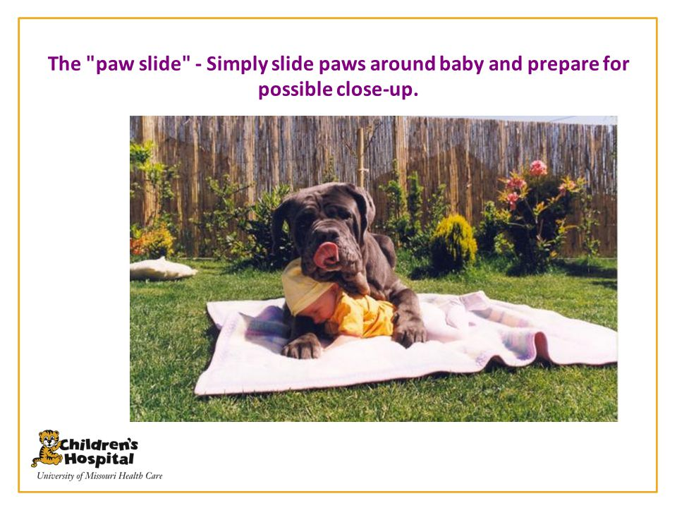 The paw slide - Simply slide paws around baby and prepare for possible close-up.