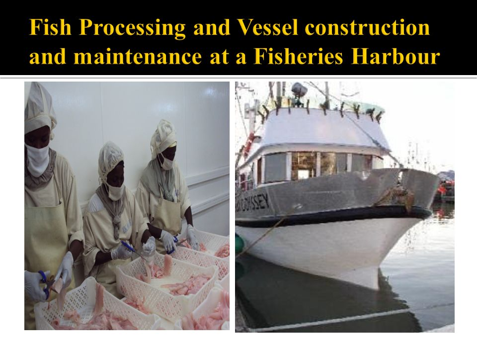 Fish Processing and Vessel construction and maintenance at a Fisheries Harbour