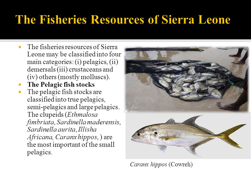 The Fisheries Resources of Sierra Leone