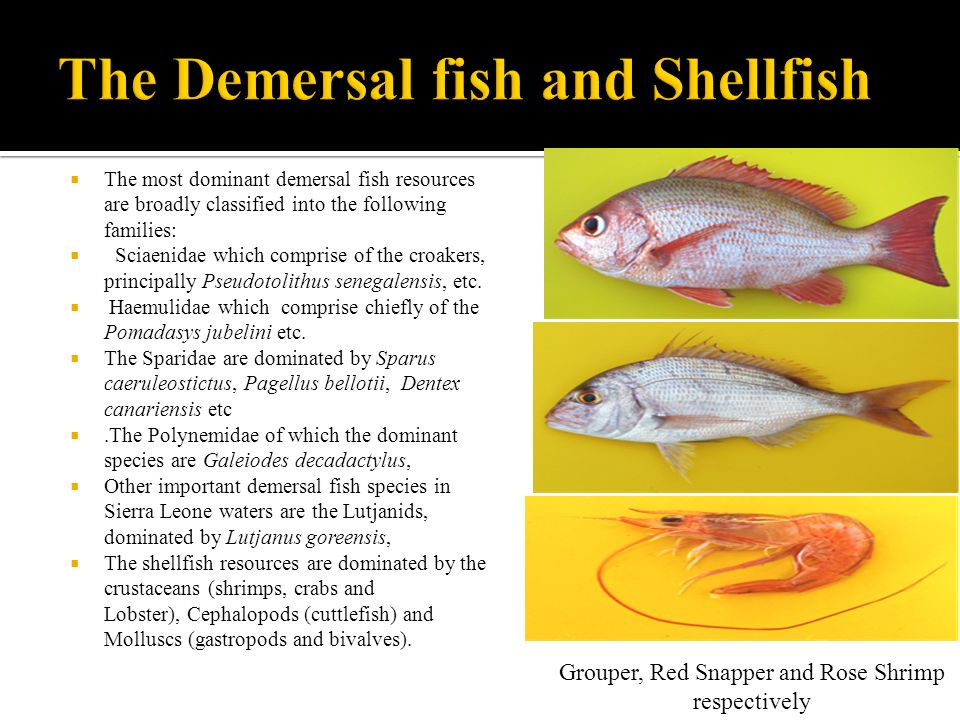 The Demersal fish and Shellfish