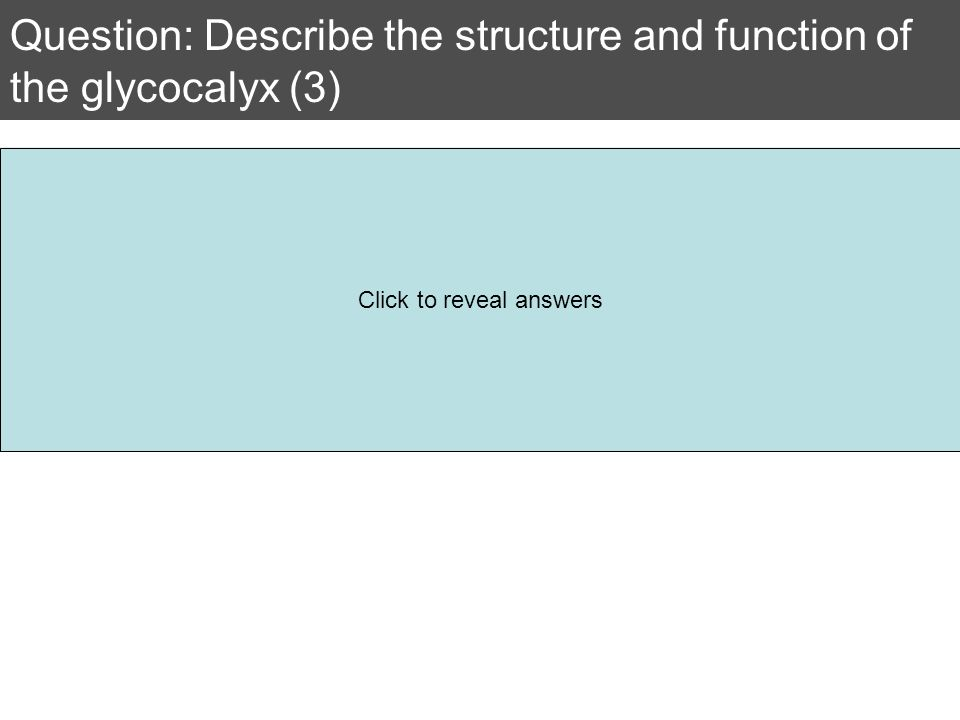 Question: Describe the structure and function of the glycocalyx (3)