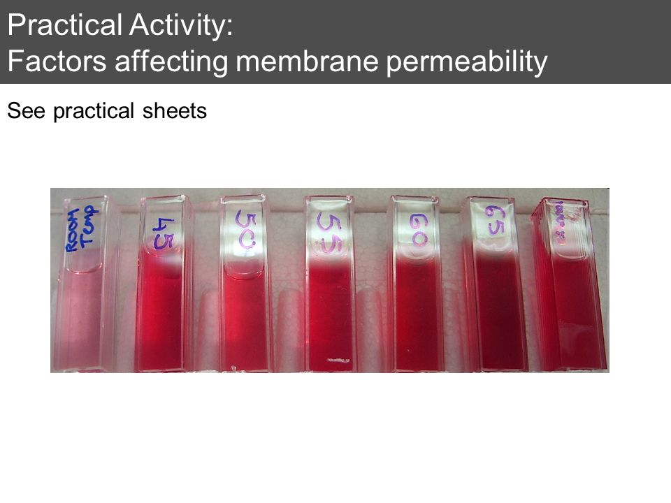 Practical Activity: Factors affecting membrane permeability