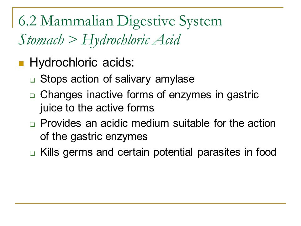 6.2 Mammalian Digestive System Stomach > Hydrochloric Acid