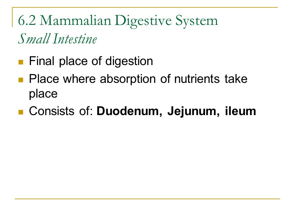 6.2 Mammalian Digestive System Small Intestine