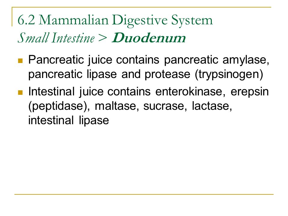 6.2 Mammalian Digestive System Small Intestine > Duodenum