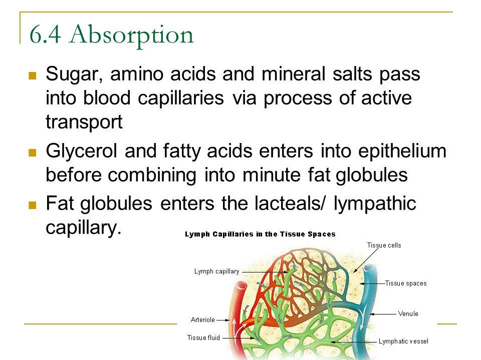6.4 AbsorptionSugar, amino acids and mineral salts pass into blood capillaries via process of active transport.