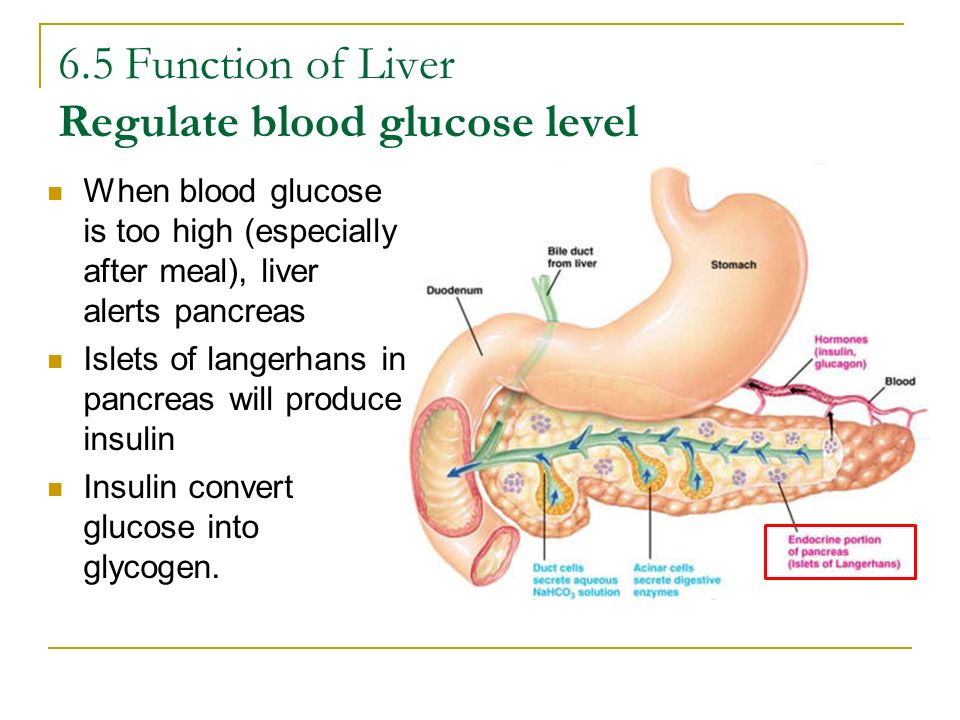 6.5 Function of Liver Regulate blood glucose level