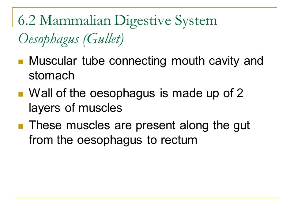 6.2 Mammalian Digestive System Oesophagus (Gullet)