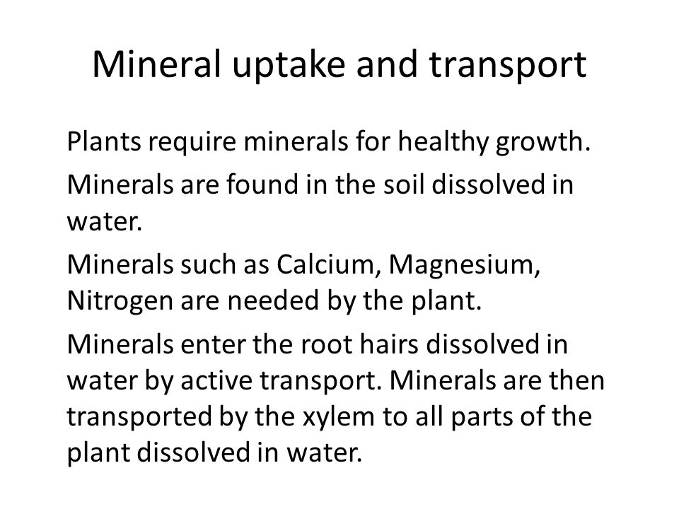 Mineral uptake and transport