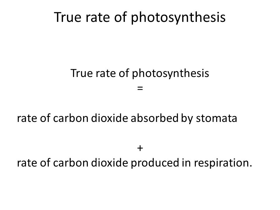 True rate of photosynthesis