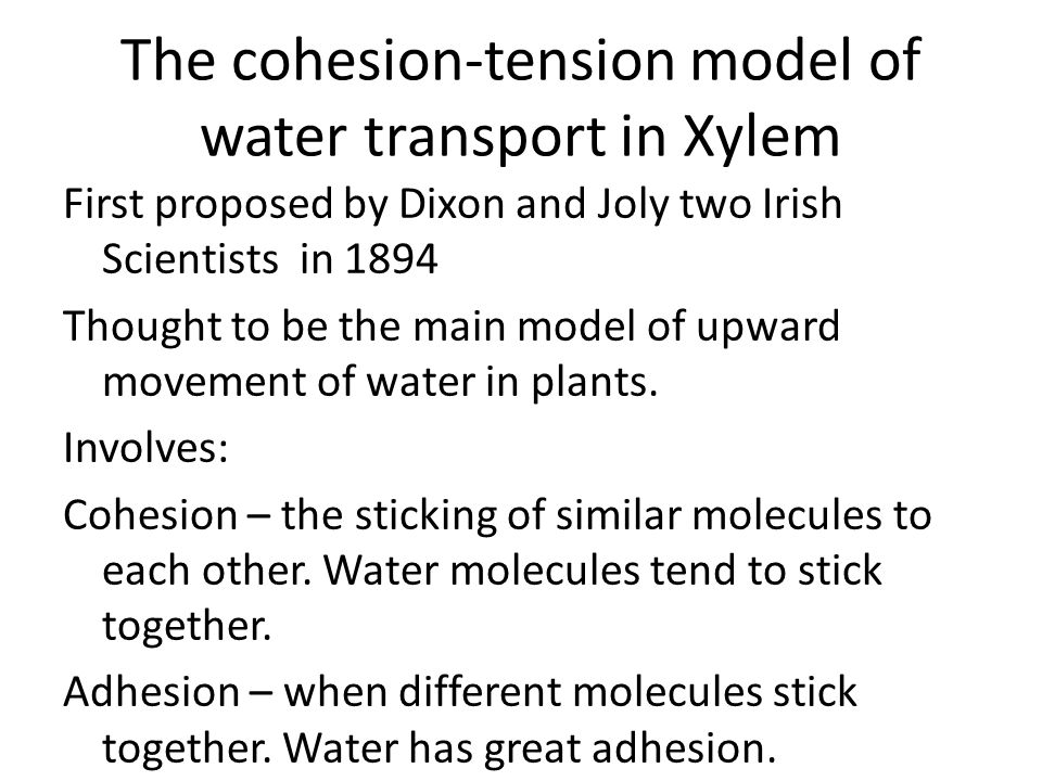 The cohesion-tension model of water transport in Xylem