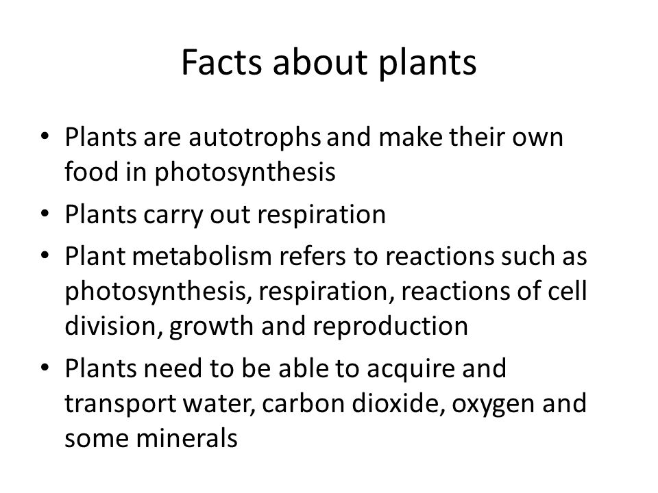 Facts about plants Plants are autotrophs and make their own food in photosynthesis. Plants carry out respiration.