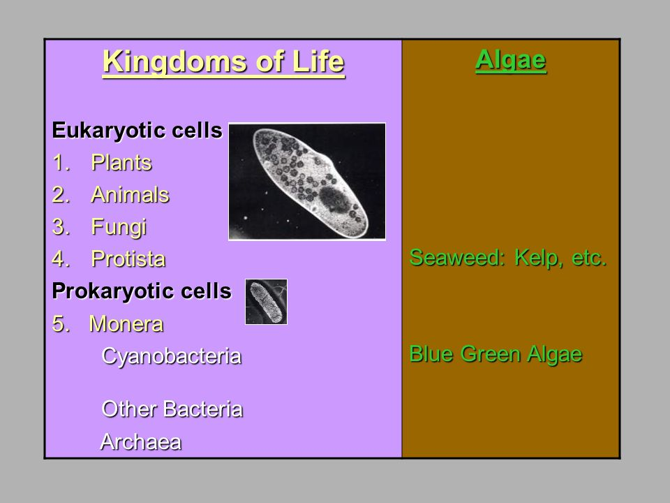 Kingdoms of Life Algae Eukaryotic cells Plants Animals Fungi
