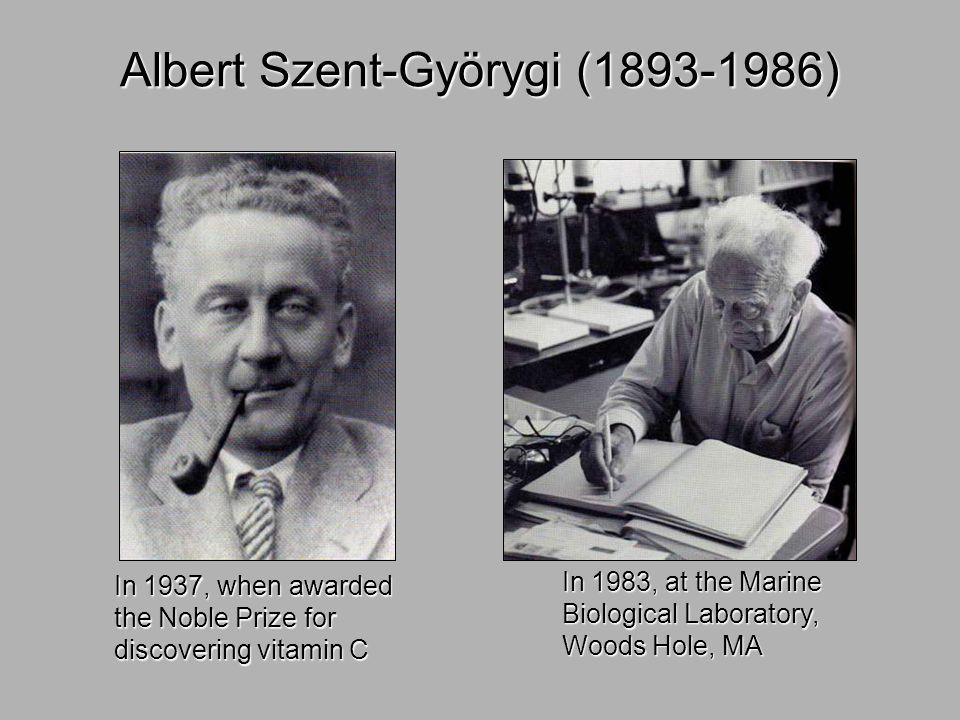 Albert Szent-Györygi (1893-1986)