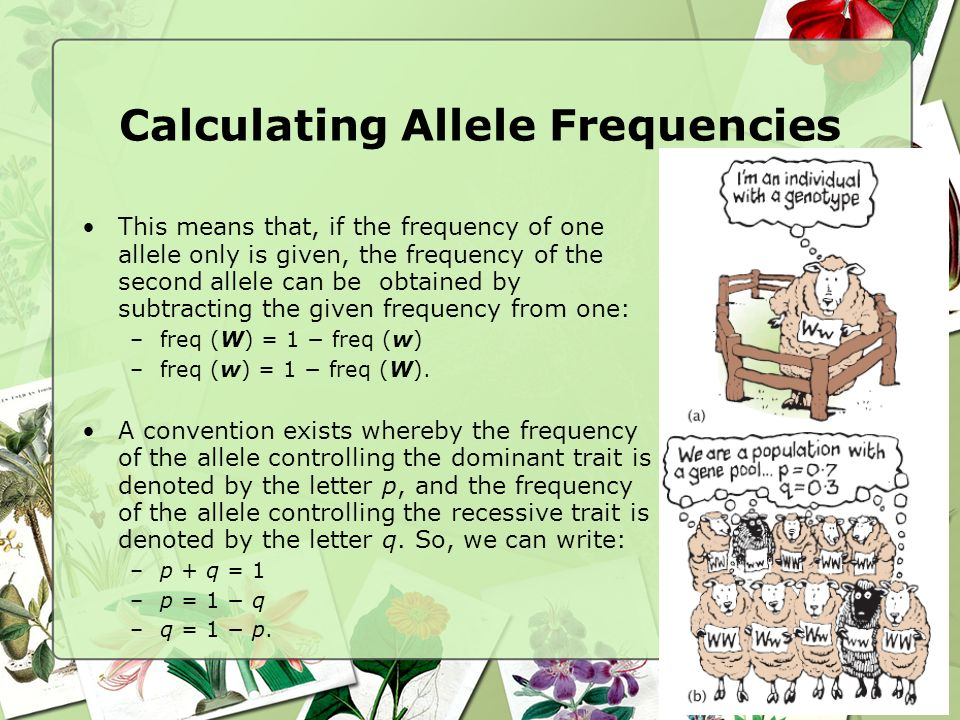 relationship between gene pool and allele frequency practice