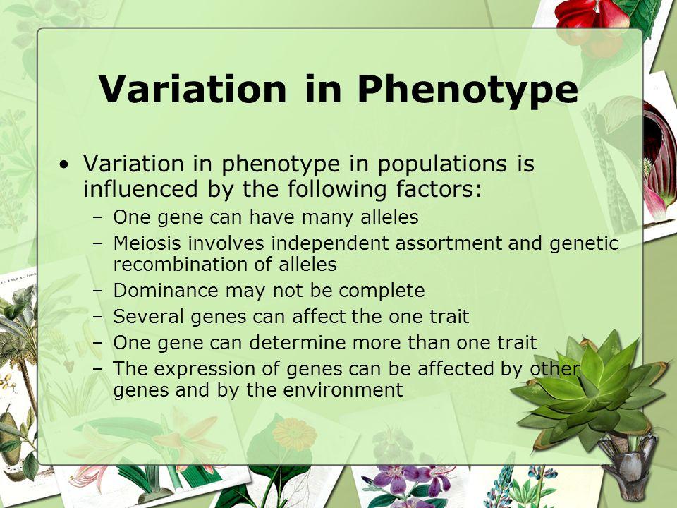Variation in Phenotype
