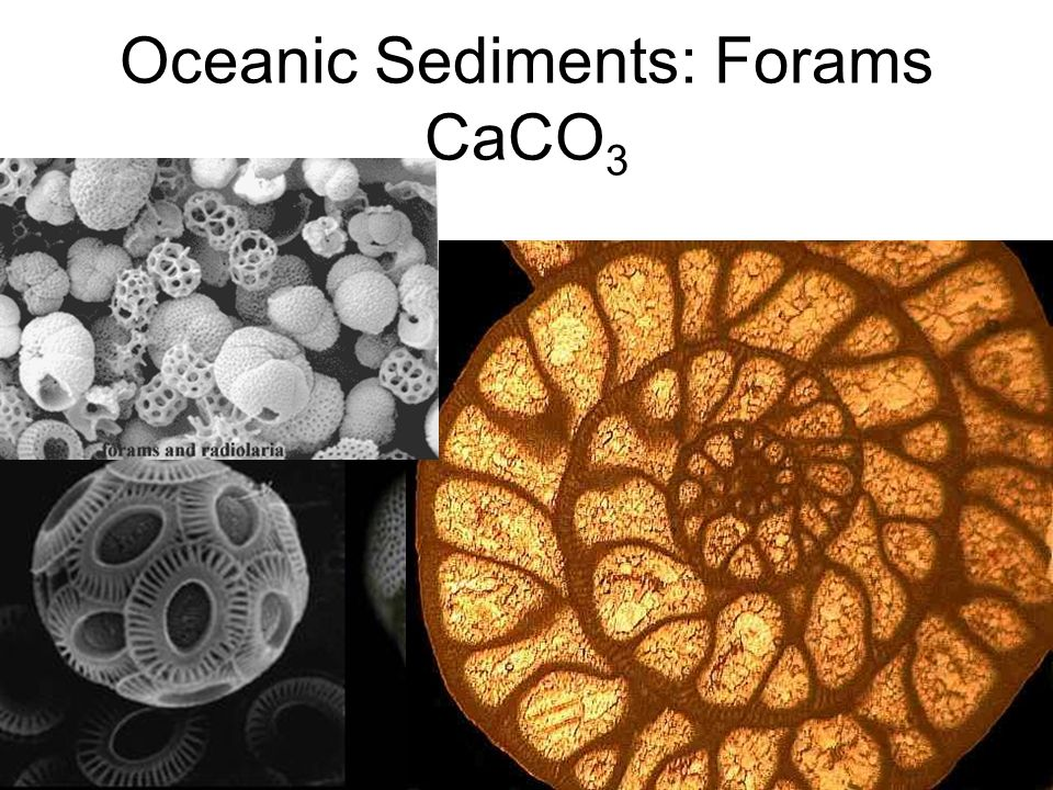 Oceanic Sediments: Forams CaCO3