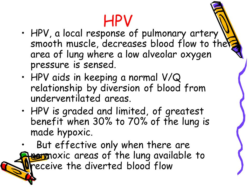 HPV HPV, a local response of pulmonary artery smooth muscle, decreases blood flow to the area of lung where a low alveolar oxygen pressure is sensed.